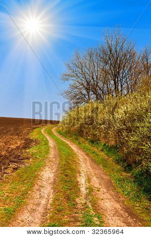 rural road in nice spring day