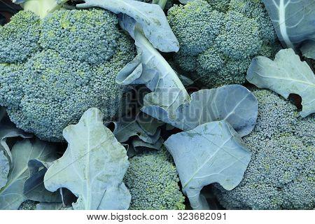 Cauliflower Filling Texture Backdrop. Fresh Vegetable Background.