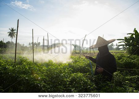 Farmers Sprayed Pepper Plants To Protect Them With Nasty Chemicals Or Nasty Animals With Manual Spra