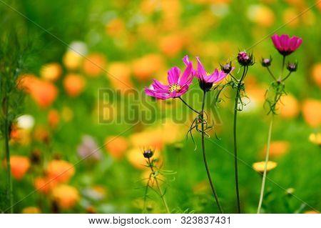 A Detail Of Wild Flowers In Meadow