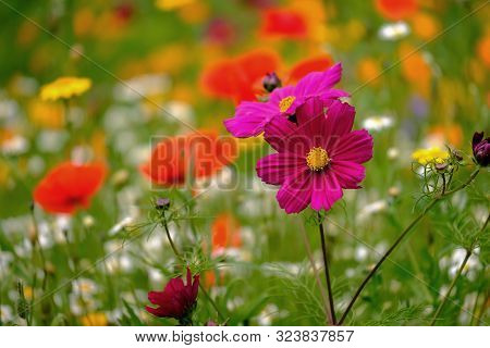 View Of Wild Meadow Flowers Of Different Species And Colour