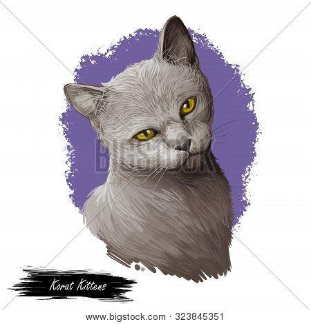 Korat Kitten With Yellow Eyes Isolated On White Background. Digital Art Illustration Of Hand Drawn T