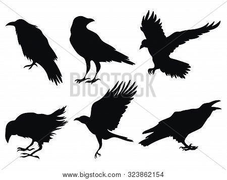 Set Of Ravens. A Collection Of Black Crows. Silhouette Of A Flying Crow. Vector Illustration Of Rave