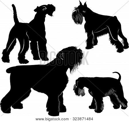 Vector Schnauzers And Fox Terrier Dogs Collection. Vector Dogs Set