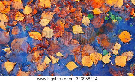 Colourful Fall Leaves In Pond Lake Water, Floating Autumn Leaf. Fall Season Leaves In Rain Puddle. S