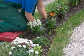 Girl Gardening On Knees Over Flowerbed