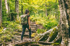 Forest hike trail hiker woman walking in autumn fall nature background in fall season. Hiking active people lifestyle wearing backpack exercising outdoors.
