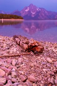 Drift Wood Log On Jackson Lake In Colter Bay Village In Grand Teton National Park Wyoming