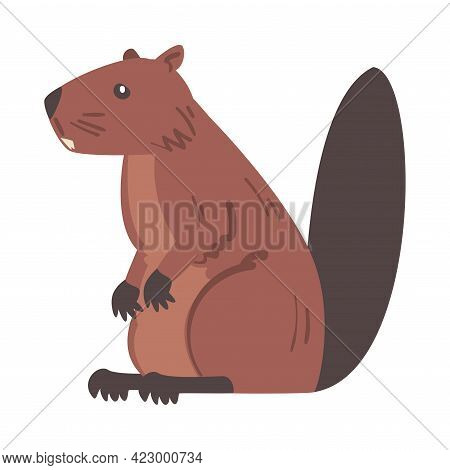 Side View Of Brown Beaver, Wild Rodent Animal Cartoon Vector Illustration