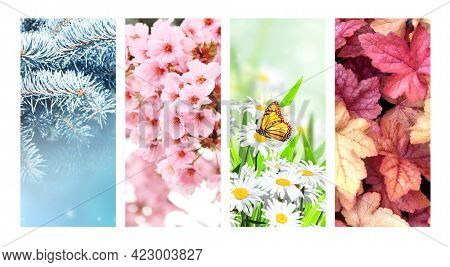 Four seasons of year. Set of vertical nature banners with winter, spring, summer and autumn scenes. Copy space for text