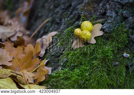 Tree Green Moss And Oak Leaves. Green Moss On Oak. Wood With Moss. Autumn In The Forest. The Leaves