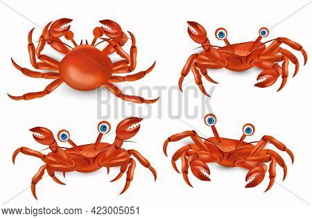 Red Cute Crab With Big Claws Four Different Pose. Crab Cartoon Character. Sea Creature Icon. Vector