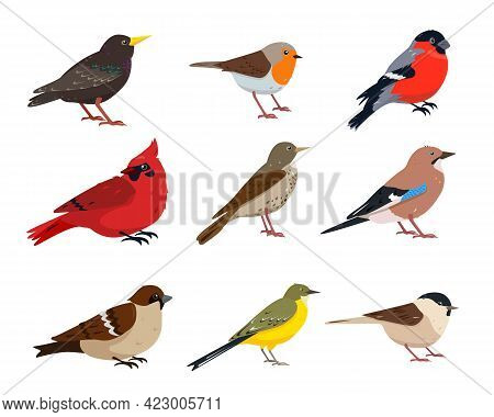 Small Birds Collection. Sparrow, Thrush, Wagtail, Red Cardinal, Robin, Jay, Chickadee, Bullfinch And