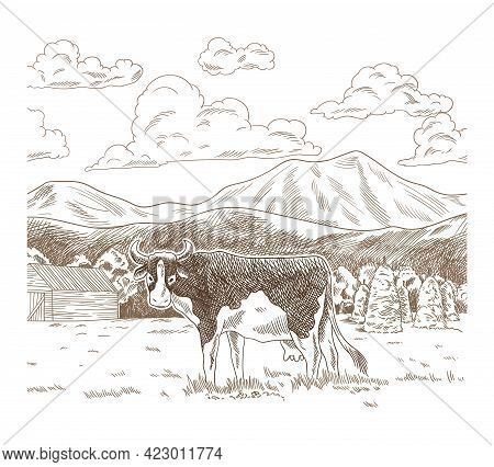 Cows Grazing On Meadow. Hand Drawn Farm Land With Barn Vector Illustration. Rural Landscape, Village