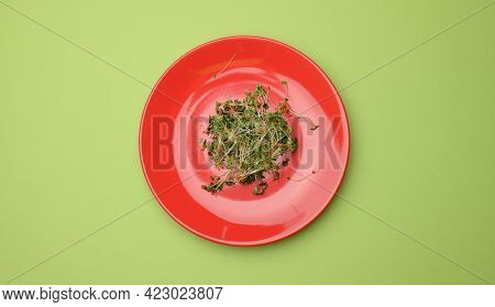 Green Sprouts Of Chia, Arugula And Mustard In A Red Round Plate, Top View. A Healthy Food Supplement