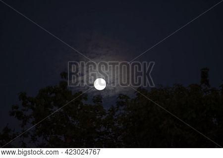 Full Moon On Night Sky Back Silhouette Tree, Moon Over Light