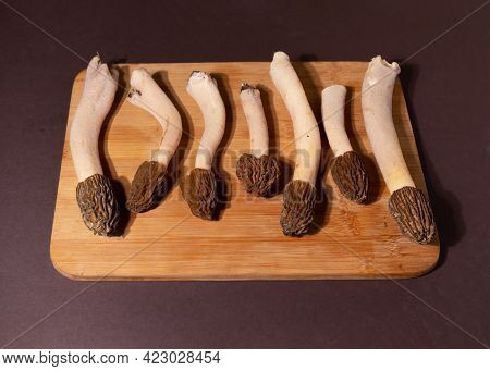 Spring Wild Morel Mushrooms Or Morchella Conica. They Are Loaded With All Kinds Of Vitamins And Mine