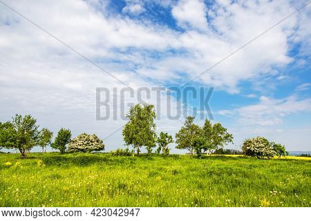 Spring Or Summer Landscape With Green Meadow, Trees, Bushes And Blue Sky With White Clouds - Czech R