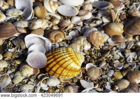 Top View Of Seashells Close Up On The Mediterranean Coast