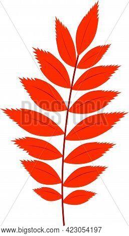 Orange Rowan Foliage