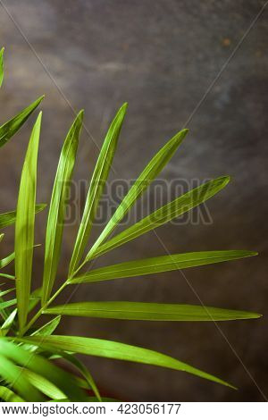 Close up of a little palm tree.