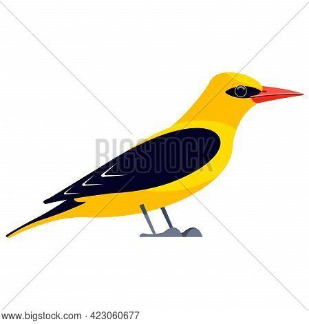 Yellow Oriole Is A Passerine Bird In The Family Icteridae. Bird Cartoon Flat Style Beautiful Charact