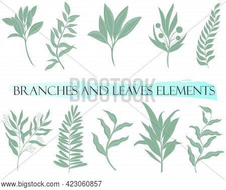 Set Of Natural Botanical Elements, Vector. Green Branches, Design Elements. Graceful Deciduous Parts