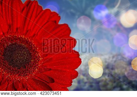 Close-up Of Half Of A Red Gerbera With Dew Drops On A Colored Background. Summer Background. Copy Sp