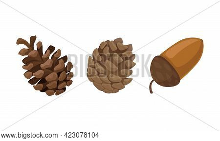 Fir Or Pine Cones And Acorns As Seed Containing Plant Part Vector Set