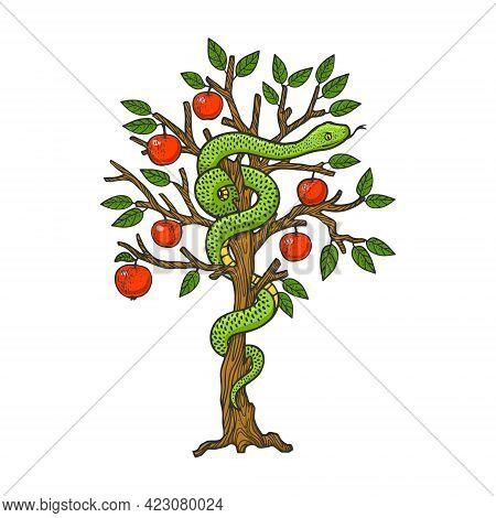 Biblical Serpent Snake On Apple Tree Color Line Art Sketch Engraving Vector Illustration. T-shirt Ap