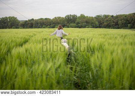 Woman With Big White Sheepdog Running On Green Rye Field. Farming And Countryside Life. Freedom And