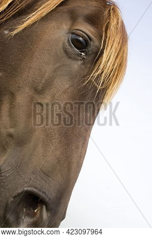Close Up Of A Horse In The Middle Of The Meadow At Afternoon