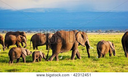 Elephants family and herd on African savanna. Safari in Amboseli, Kenya, Africa