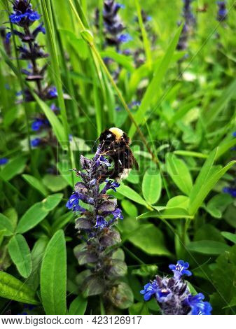 Bee On A Purple Flower In The Grass