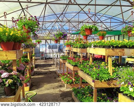 Sale Of Indoor And Outdoor Plants In A Local Garden Center