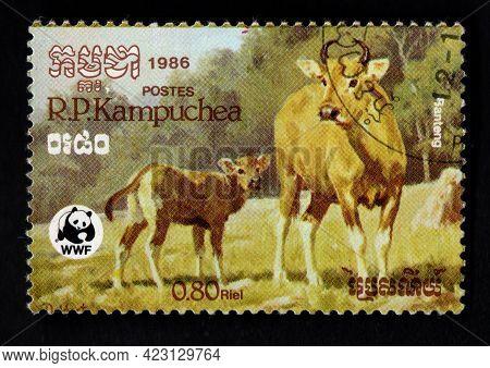 Kampuchea - Circa 1986: A Stamp Printed In Kampuchea Shows Water Buffalo Or Domestic Asian Water Buf