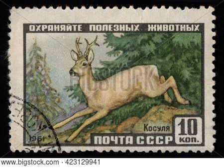 Soviet Union - Circa 1961: Stamp Printed In Ussr With Wild Roe. Postal Stamp About Wild Ungulate Ani