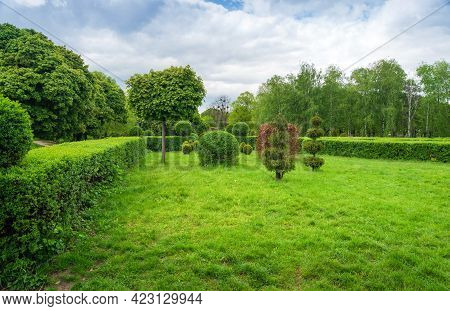 Topiary Art In Park Design. Trimmed Trees And Bushes In The Spring City Park. An Evergreen Landscape