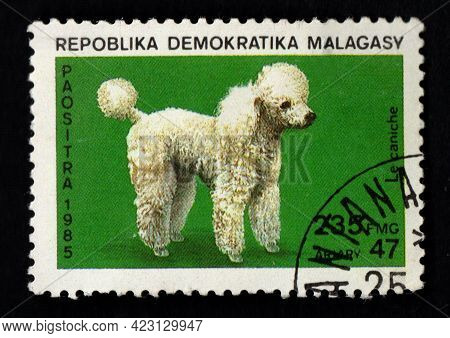Malaysia - Circa 1987: Malagasy Postage Stamp Dedicated To Thoroughbred Poodle. Dog. Pet Imaged On P