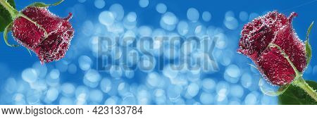 Widescreen Blue Background With Roses And Bokeh