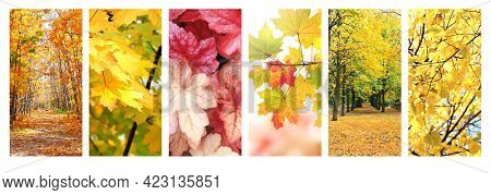 Calm fall season. Set of vertical autumn banners  with road in beautiful autumn forest, Maples and birch leaves of green, yellow and orange leaves, footpath in the woodland in sunny day