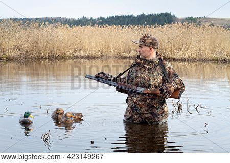The Hunter Is Standing In A Reedy Lake, Waist-deep In Water. Plastic Duck Decoys Float Next To It. H