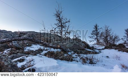 Dry Grass And Lichens Grow On The Rocks. There Is A Broken Branch In The Snow. Bare Trees Against Th