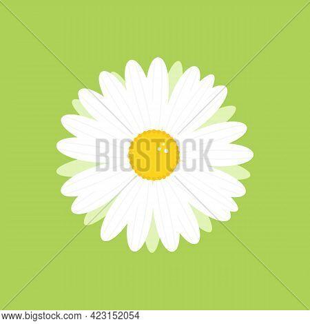 Camomile, Daisy Flower Cute Cartoon Style Icon, Illustration For Nature Design.