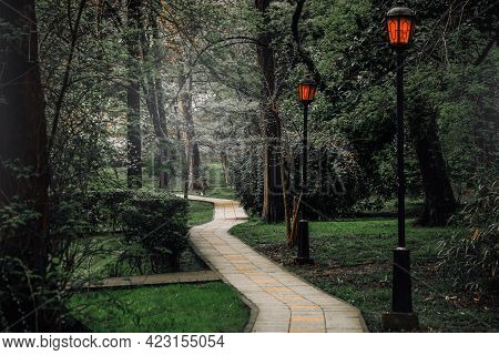 A Pathway Through The Dark Mystical Pine Forest. Natural Tunnel. Tall Tree Silhouettes In A Thick Mo