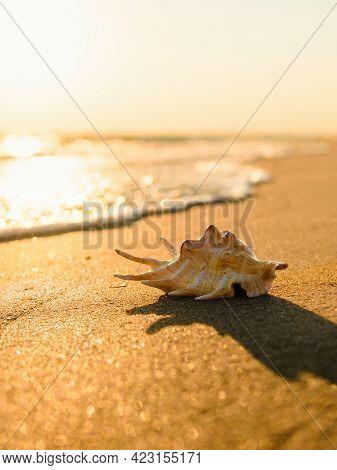Golden Sunset On The Seashore. Vertical Landscape. Seashell On A Sandy Beach. Selective Focus On The