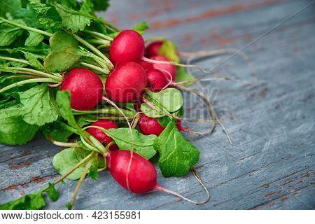 Bunch Of Fresh Garden Radish On Table. Organic And Natural Food. Radish Harvest