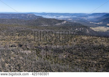Drone Aerial Photograph Of Forest Regeneration After Bushfires In The Blue Mountains In New South Wa