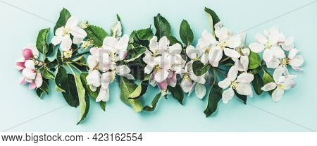 Spring floral background, wallpaper. Flat-lay of white apple blossom flowers over light blue background, top view, flat lay. Womens day mothers day holiday greeting card or wedding invitation