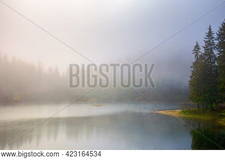 Foggy Morning Scenery On The Lake. Beautiful Nature Of Synevyr National Park In Autumn. Fir Forest O